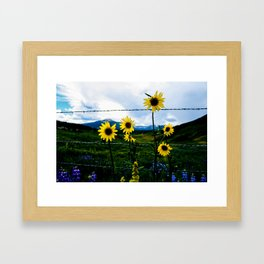 Mountain Sunflower in Crested Butte Framed Art Print