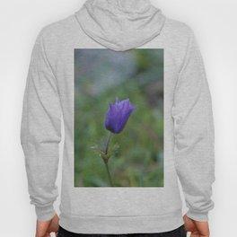 Lone Blue-Purple Anemone Hoody
