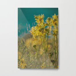jaune d'or -- golden yellow summer wildflowers aglow in the sunshine Metal Print
