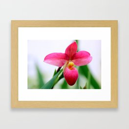 Perfectly Pink Framed Art Print