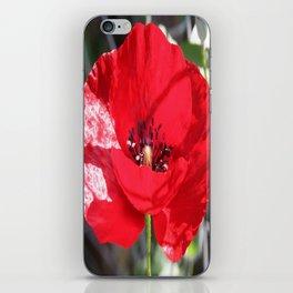 Single Red Poppy Flower  iPhone Skin