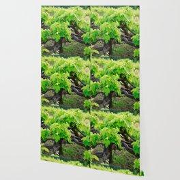 Grape vines Wallpaper