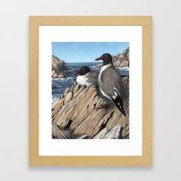 Laughing Gulls Framed Art Print