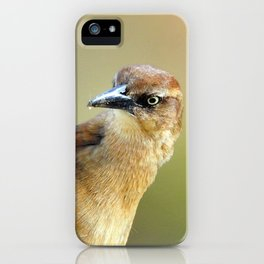 Female Great-tailed Grackle iPhone Case