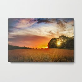 Wheat field at sunset Metal Print