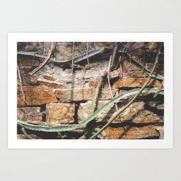 Cactuswall Art Print