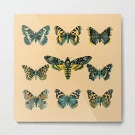 Butterflies and Moth of Europe Metal Print