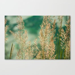 Grass on the water Canvas Print