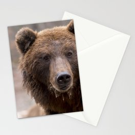 Beautiful Brown Bear Stationery Cards