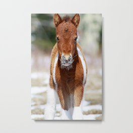 The Newbie and His Whiskers - A Foal at Grayson Highlands Metal Print