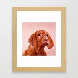 Vizsla puppy- Hungarian pointer Framed Art Print