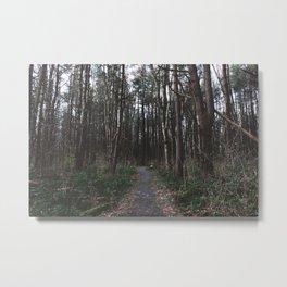 Forest Trail LVI Metal Print