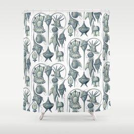 Ernst Haeckel Peridinea Plankton Shower Curtain