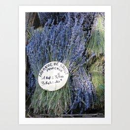 Provence Lavender Art Print