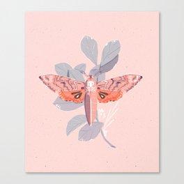 Death's Head Moth Print Canvas Print