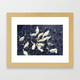 Swans and Ducks Framed Art Print