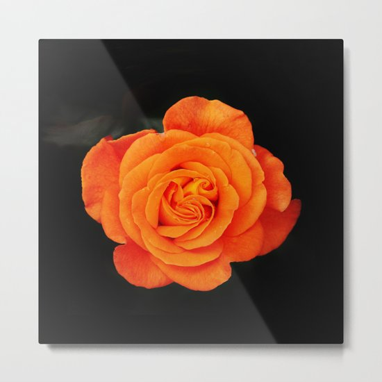 Romantic Rose Orange Metal Print