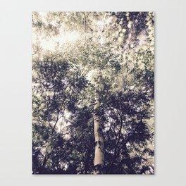 Dappled Light Filtered Through Trees Canvas Print