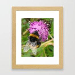 BEE ON KNAPWEED FLOWER Framed Art Print