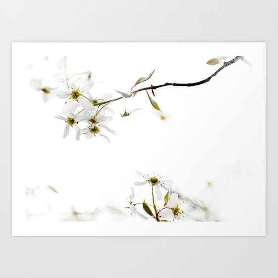 blossoming white Art Print