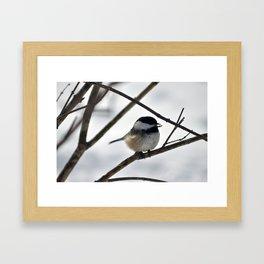 Chickadee Treat Framed Art Print