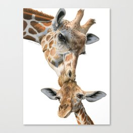 Mother And Baby Giraffe Canvas Print