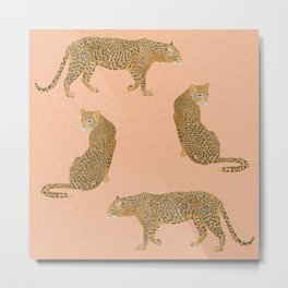 sunset leopards Metal Print
