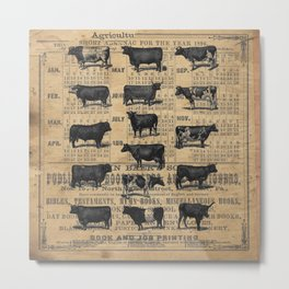Vintage 1896 Cows Study on Antique Lancaster County Almanac Metal Print