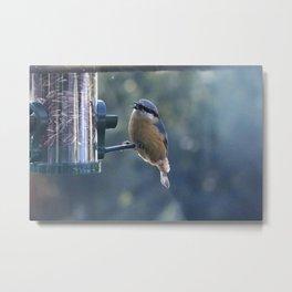 A bird enjoying a bird-feeder Metal Print