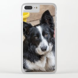 Bailey Clear iPhone Case