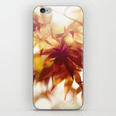 Autumn light iPhone & iPod Skin