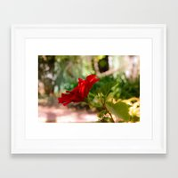 hibiscus Framed Art Prints featuring Hibiscus by Sébastien BOUVIER