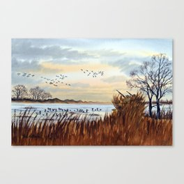 Duck Hunting Season Begins For The Canvasback Canvas Print