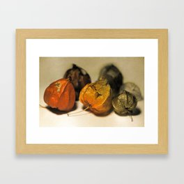 Physalis Part I. Framed Art Print