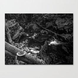 Missisquoi River in Vermont - 2 BW Canvas Print