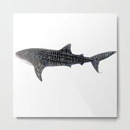 Whale shark Rhincodon typus Metal Print