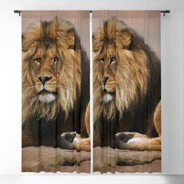 Gorgeous Wonderful Big Male African Lion Chilling Close Up Ultra HD Blackout Curtain