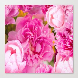 Large Pink Peony Flowers #decor #society6 #buyart Canvas Print