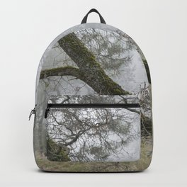 Foggy oaks. Into the woods.... Backpack