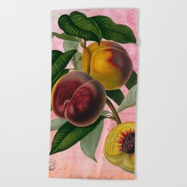 Vintage Botanical Collage, Bradford Peach Beach Towel