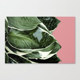 Lush Leaves Canvas Print