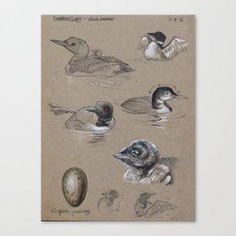 Common Loon Studies Canvas Print