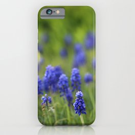 Grape Hyacinth in Spring iPhone Case