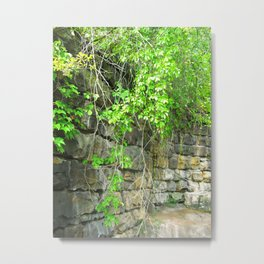 Where The Vines Grow Metal Print