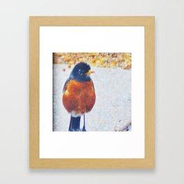 Robin in the Rain Framed Art Print