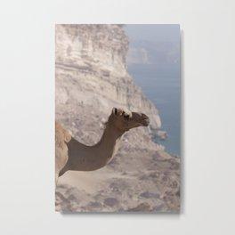 Dhofari Camel Metal Print