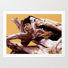 Mountain Stream Driftwood Art Print