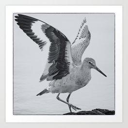 Willet Wings Art Print