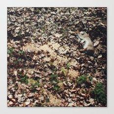 Dead Rabbit Canvas Print