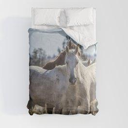 Traveler and His Bachelor Band Comforters